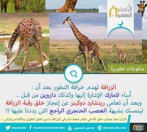 خلق الزرافة ضد التطور