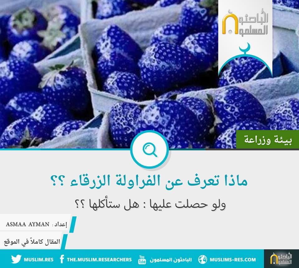 الفراولة الزرقاء ماذا تعرفون عنها ؟