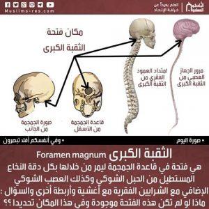 الثقبة الكبرى Foramen magnum