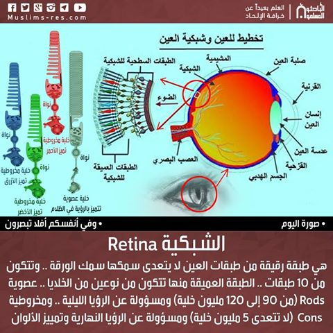 الشبكية Retina