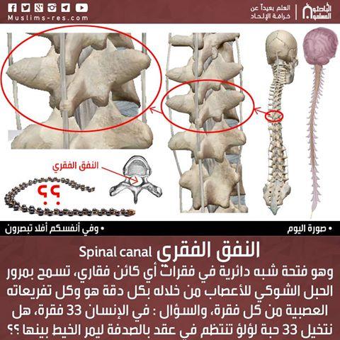 النفق الفقري Spinal canal