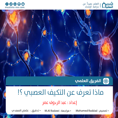 التكيف العصبي – هل تنقسم الخلايا العصبية ؟؟