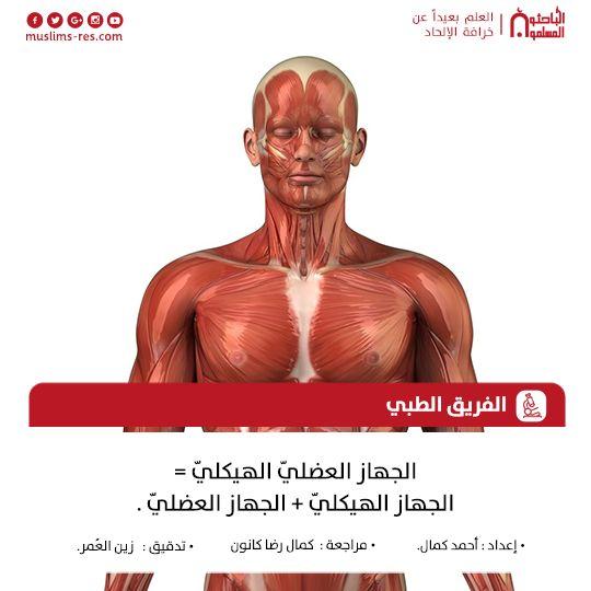 الجهاز العضليّ الهيكليّ