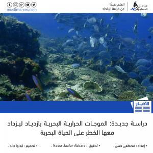 دراسة-جديدة-الموجات-الحرارية-البحرية-بازدياد-ليزداد-معها-الخطر-على-الحياة-البحرية2